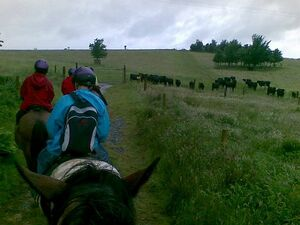 Killarney Horse Riding Programme